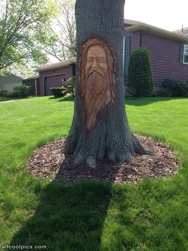 Awesome tree carving cool pictures