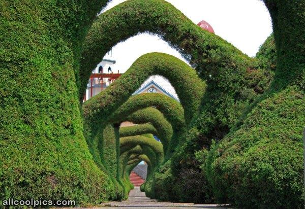 Cool Bushes To Walk Under