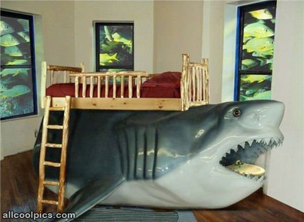 Shark Awesome Beds 600 x 438